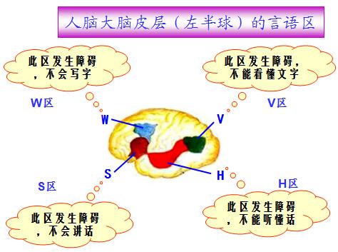 高二生物知识点归纳:通过神经系统的调节(3)