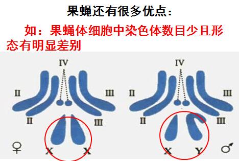 高二生物知识点归纳:基因在染色体上(2)