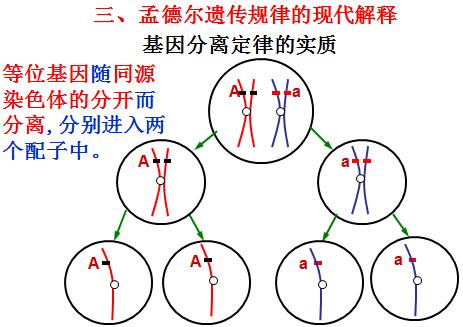 高二生物知识点归纳:基因在染色体上(4