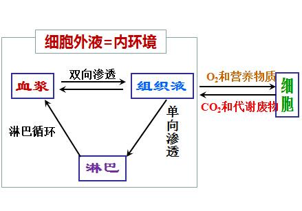 高二生物4教案:细胞生活的环境(2)