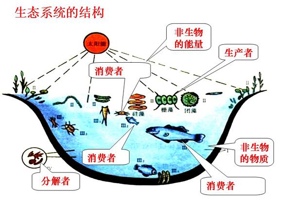 高一生物教案:生态系统的结构