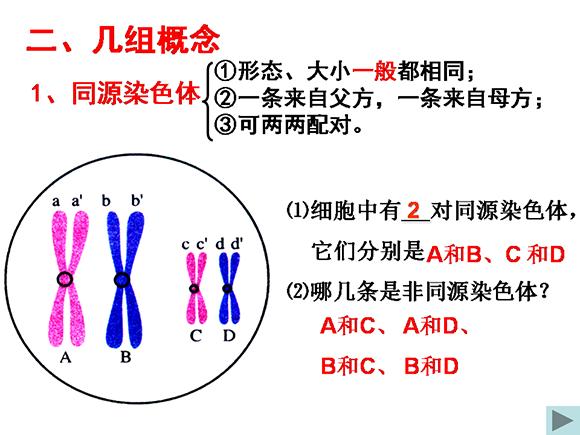 高一生物教案:减数分裂和受精作用(1)(第3页)