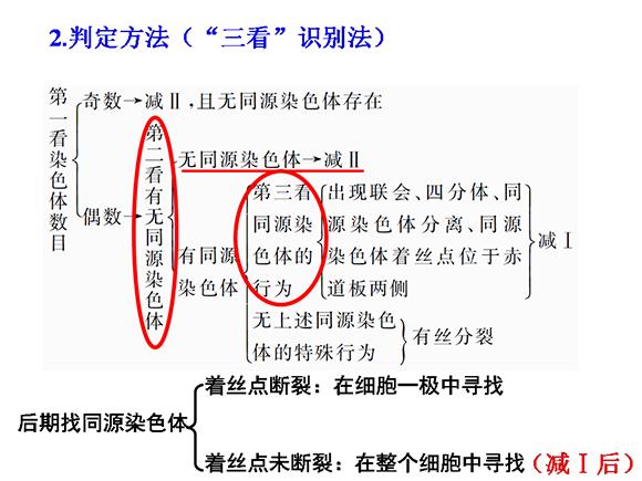 减数分裂和受精作用(5)