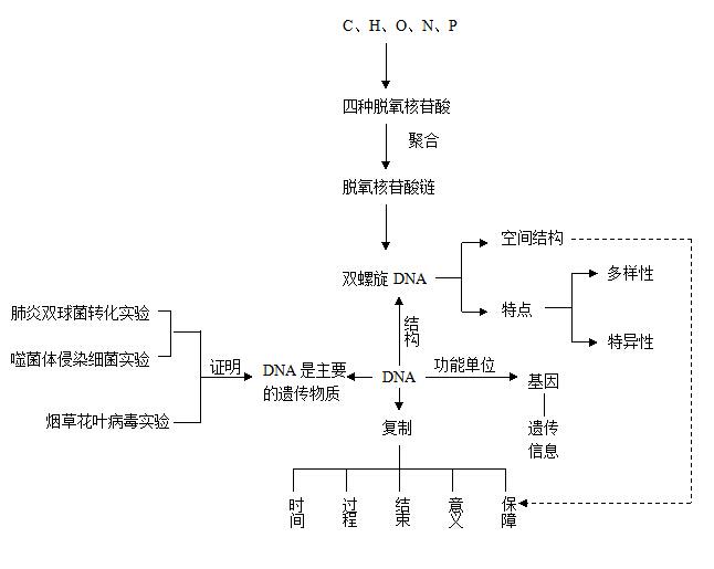 绘制基因结构图