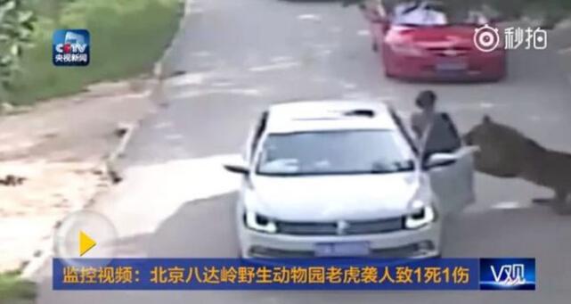 北京八达岭野生动物园两名游客遭老虎袭击