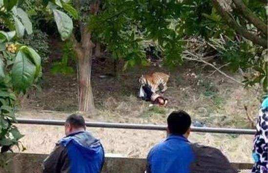 老虎伤人,动物园到底有没有责任?(双语)