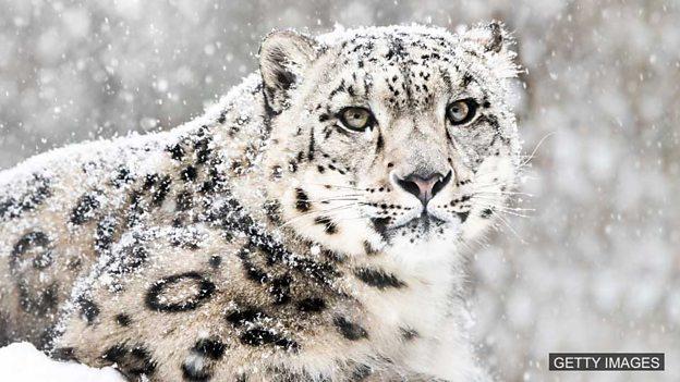 Latest 'endangered species' list published