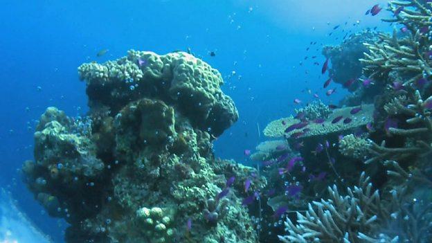 研究说酸性化海洋会导致海洋生物减少