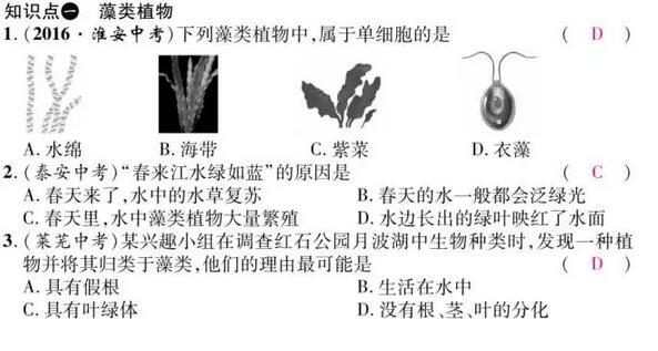 初一生物知识点必背清单:藻类、苔藓和蕨类植物