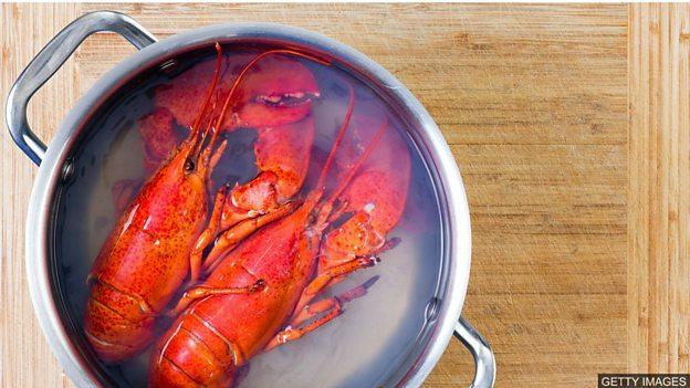 动物保护人士呼吁停止活煮龙虾