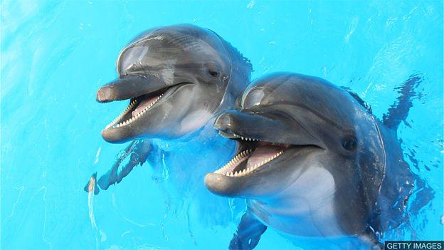 """科学家研究圈养海豚的""""幸福度"""""""