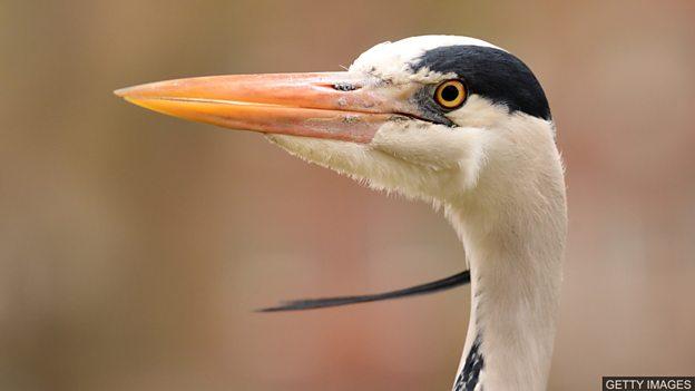 化石新发现有助于解释鸟类进化过程