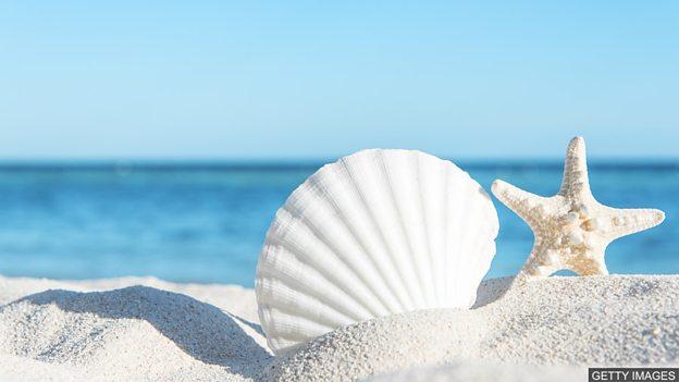 """小测验 — 与""""海洋""""相关的表达"""